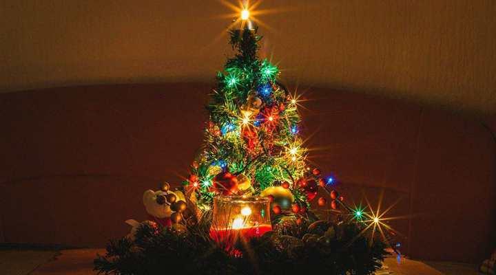 美國:成本上漲推高聖誕樹身價