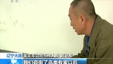 遼寧大連:孔雀飛入辦公樓 一住一個多星期
