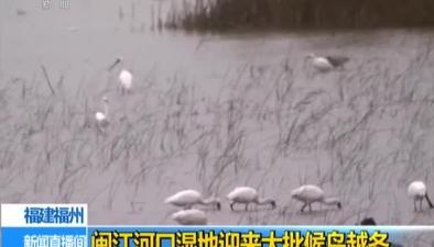 福建福州:閩江河口濕地迎來大批候鳥越冬