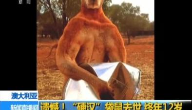 """澳大利亞:遺憾!""""硬漢""""袋鼠去世 終年12歲"""
