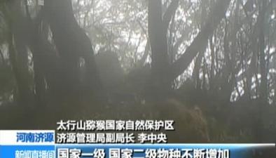 河南:生態改善 太行山珍稀野生動物猛增