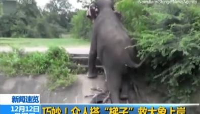 """巧妙!眾人搭""""梯子""""救大象上岸"""