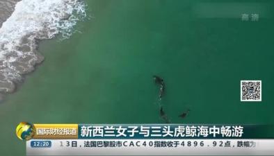 新西蘭女子與三頭虎鯨海中暢遊