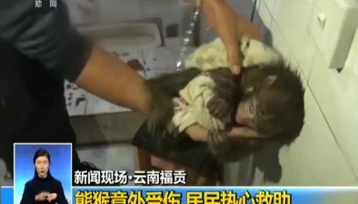 雲南福貢:熊猴意外受傷 居民熱心救助