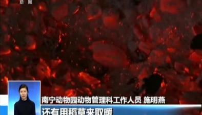 廣西南寧:寒潮來襲 動物們溫暖過冬