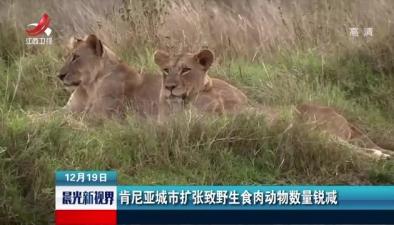 肯尼亞城市擴張致野生食肉動物數量銳減