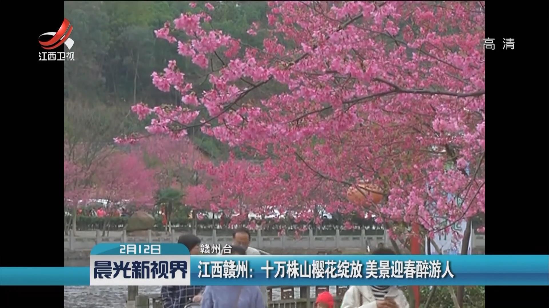 江西贛州:十萬株山櫻花綻放 美景迎春醉遊人