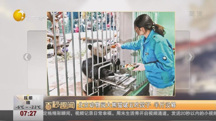 北京動物園大熊貓破五吃餃子 半斤沒夠