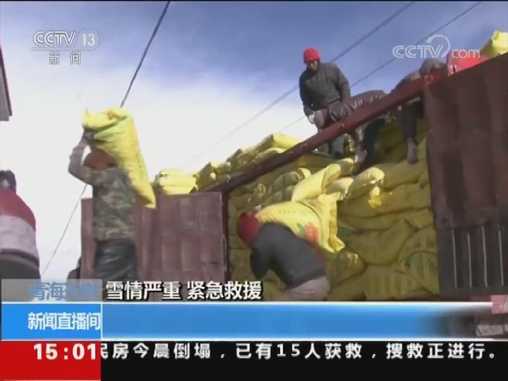 青海玉樹 雪情嚴重 緊急救援 多管齊下 保障飼草料供應