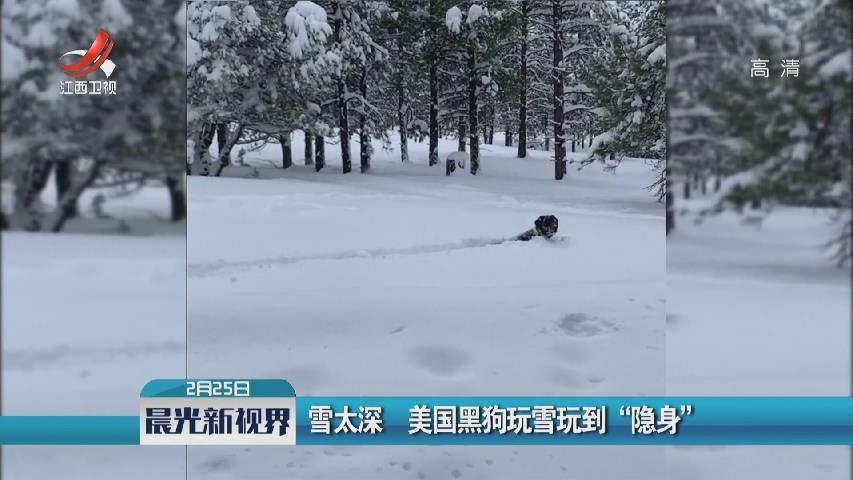 """雪太深 美國黑狗玩雪玩到""""隱身"""""""