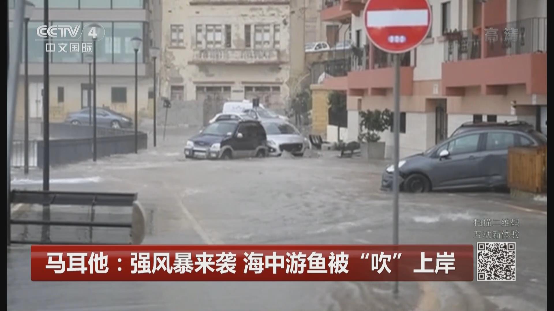 """馬耳他:強風暴來襲 海中遊魚被""""吹""""上岸"""