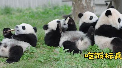 熊貓社區|守護大熊貓的青青草原