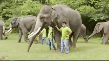 中國亞洲象增加 保護力度加大