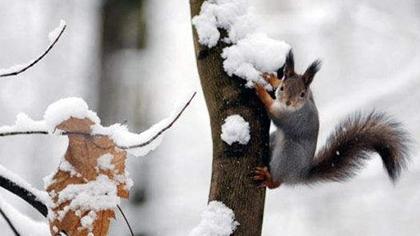清冷! 風雪飄揚 俄莫斯科州迎初雪
