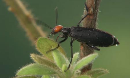 打開昆蟲世界的大門