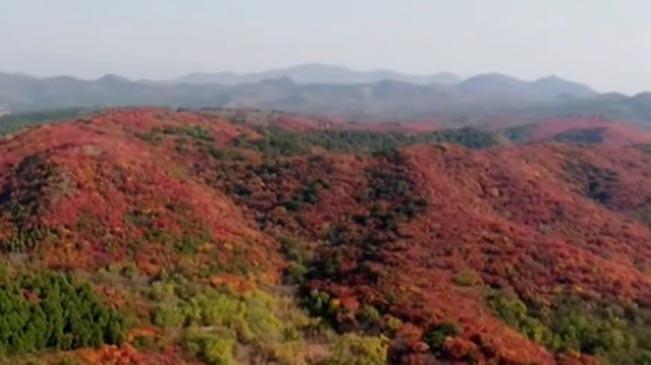 北京:密雲——彩葉進入最佳觀賞期