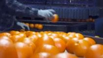 湖南:農産品産銷對接 農民豐産豐收