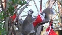 倫敦動物園為動物們送上聖誕禮物