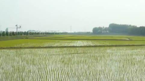 """黑龍江:""""稻田公園""""迎賓客 農民收入穩增長"""