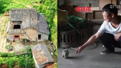 浙江:左鄰右舍已搬走 男子為貓頭鷹守深山老屋30年