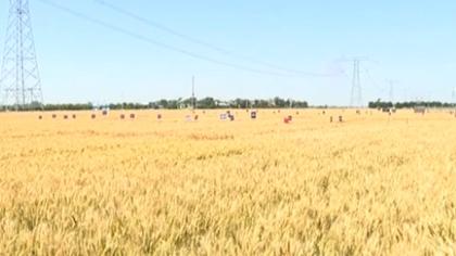 陜西:智能平臺助力夏收 實現農機資源共享