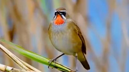 四川雅安:城市濕地觀鳥體驗區 紀錄鳥類超500種