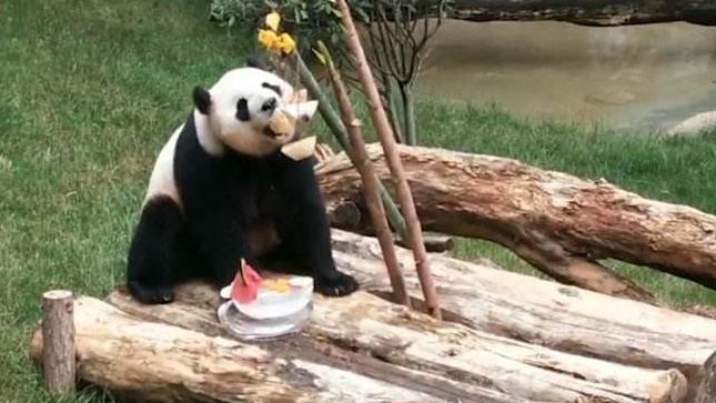 大熊貓吃冰粽過端午