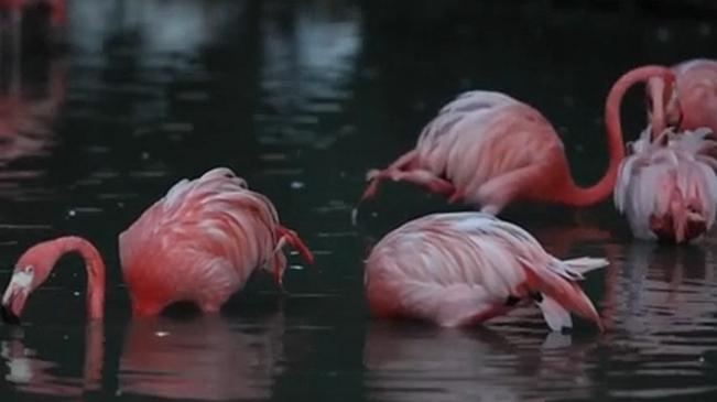 上海野生動物園暑期延長營業時間