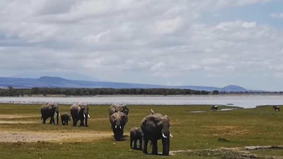 非洲多國出臺政策重振旅遊業