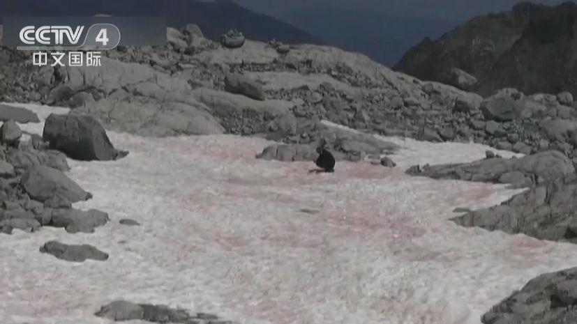 加速融化?阿爾卑斯山現粉紅色冰川