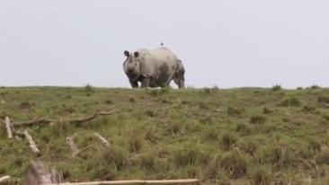 洪水肆虐 印度珍稀野生動物也遭殃