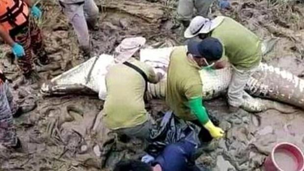 恐怖! 馬來西亞14歲男孩遇害 鱷魚腹中現遺骸