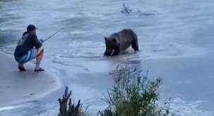 漁夫釣上鮭魚 被野熊一把搶走