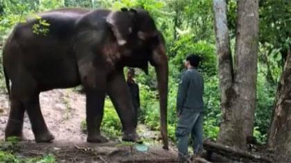 世界大象日——走進我國亞洲象種源繁育及救助中心