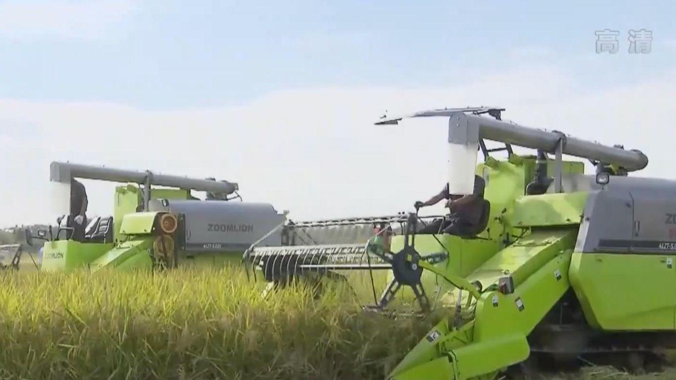 農業農村部:早稻收獲已基本結束 增産趨勢明顯