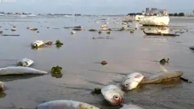 """海灘頻現""""另類海貨"""":大量死魚綿延海灘 當地介入調查"""