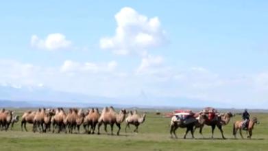 新疆巴州:巴音布魯克草原展開秋季轉場