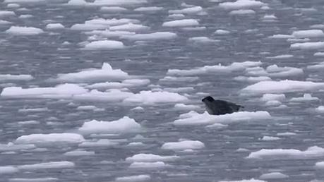 北極冰蓋流失程度驚人 生命物種面臨威脅