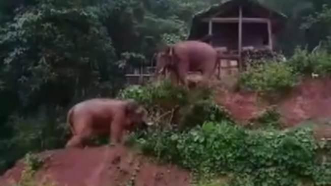 雲南普洱:野象進村襲擊村民 當地加強監測應對
