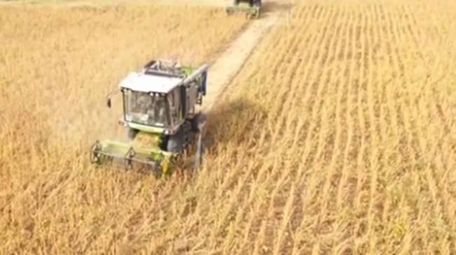 山東菏澤:大豆套種 新模式助農增收