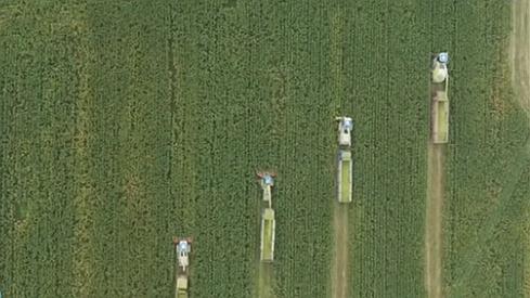山東淄博:青貯玉米收獲忙 種養結合助農增收
