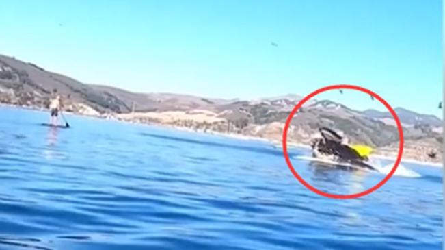 美國:近距離觀鯨被吞 兩名女子險喪命