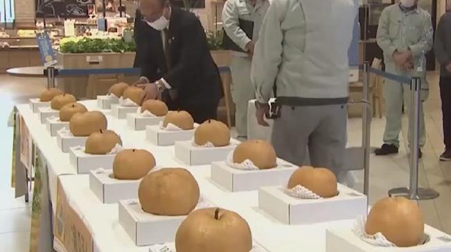 """豐收!日本""""梨子比賽"""" 近3公斤重巨型梨勝出"""
