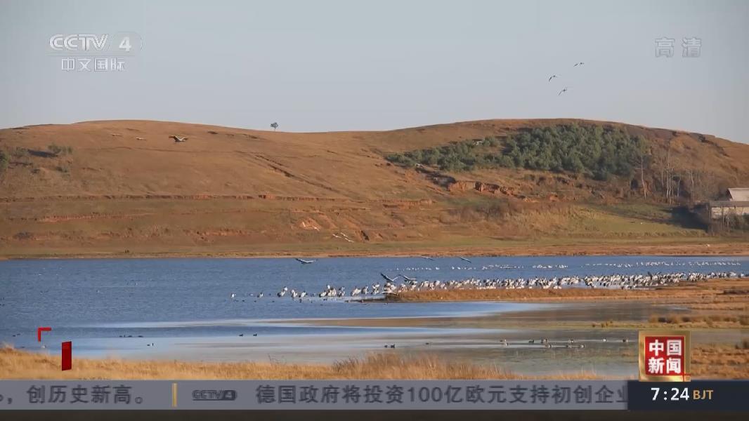 雲南大山包越冬黑頸鶴數量創歷史最高紀錄