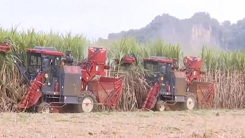廣西崇左:機械化助力甘蔗採收