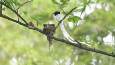 聚焦林長制新進展:生態改變 山青水綠鳥蹁躚