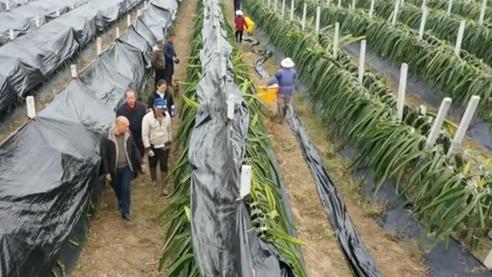 廣西興業:做好防寒防凍工作 確保農作物安全過冬