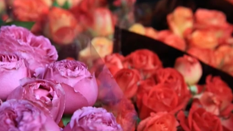 雲南昆明:迎新春 鬥南年宵花市場逐漸升溫