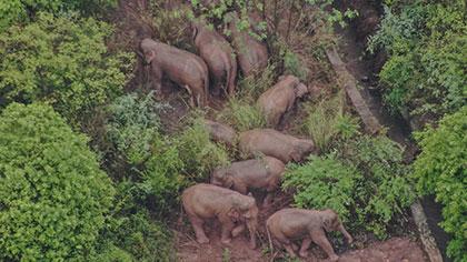 雲南:從衛星看亞洲象生活的西雙版納保護區