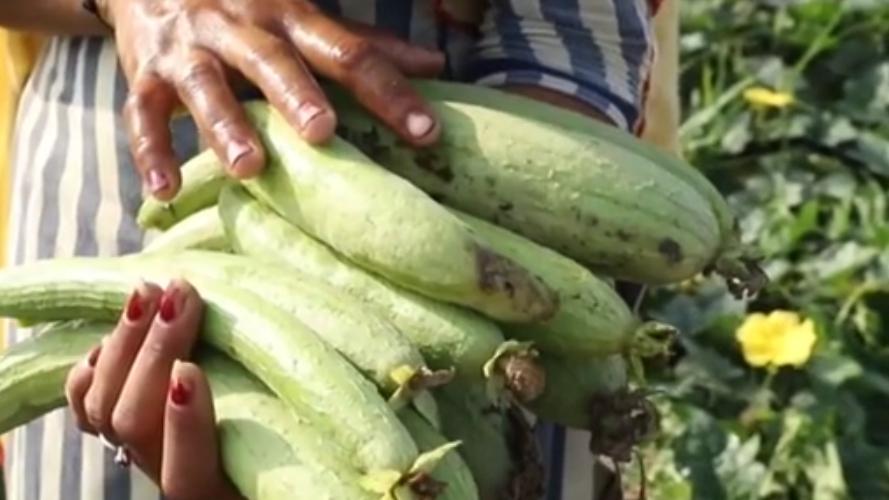 印度:疫情致蔬菜運銷困難 菜農被迫賤賣棄菜